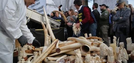 Ivory Crush, Circo Massimo - Roma
