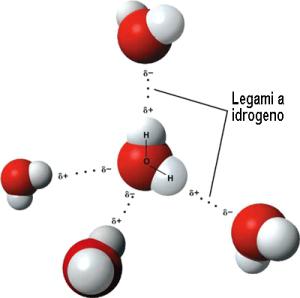 legami a idrogeno