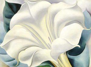 fiore-bianco-di-okeeffe