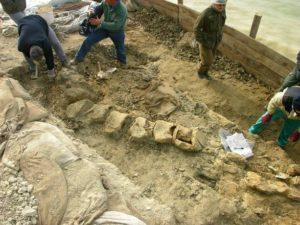 giuliana-il-piu-grande-fossile-di-cetacio-al-mondo-il-cui-studio-potrebbe-rivelarci-importanti-imformazioni-sui-mutamenti-climatici