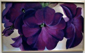 fiore-viola-della-okeeffe