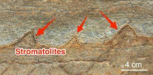 stromatolite-di-3-700-milioni-di-annni
