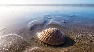 conchiglie e riva del mare