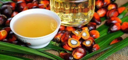 Parlamento UE solo olio di palma sostenibile