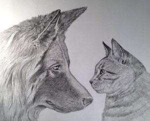 Taiwan cane e gatto