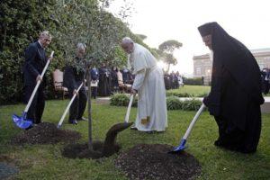 8 giugno 14 invocazione pace - pianta ulivo